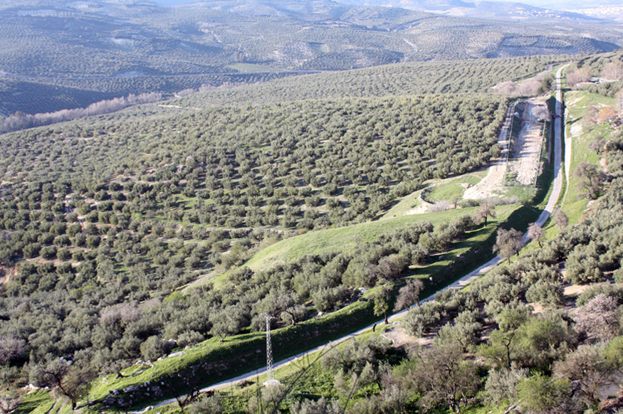 via verde del aceite zuheros